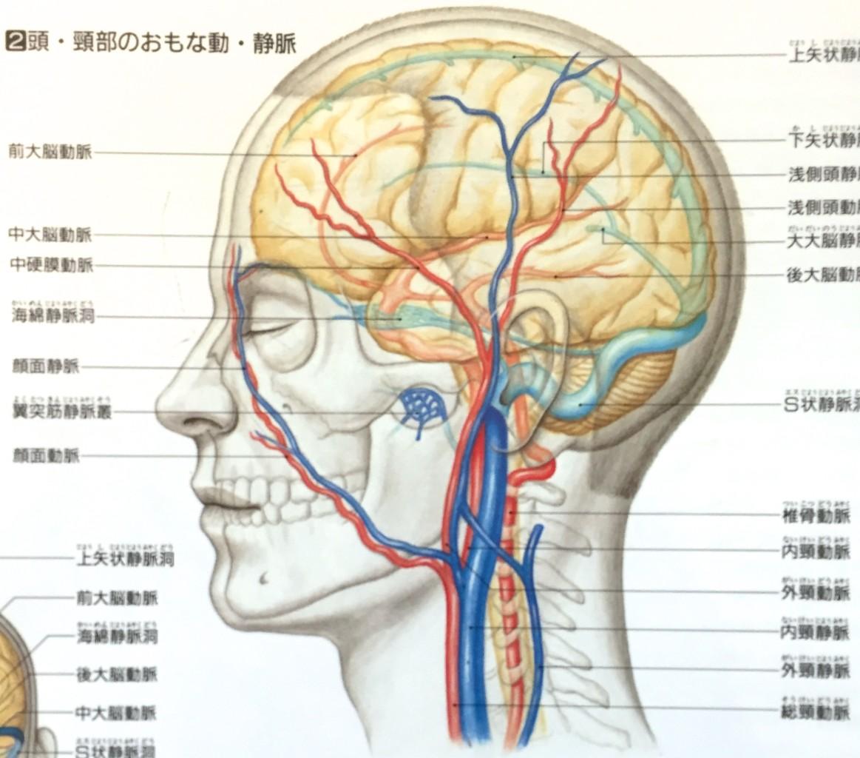 「頭の血管」の画像検索結果